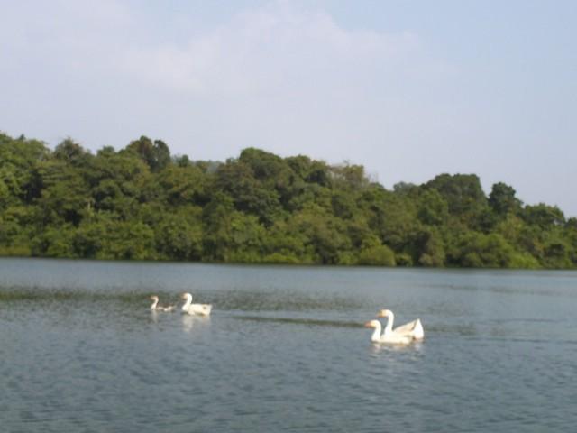 маям лэйк (озеро Маям)
