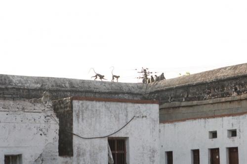 Окупанты в храме Вирупакши