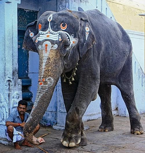 Храмовая слониха