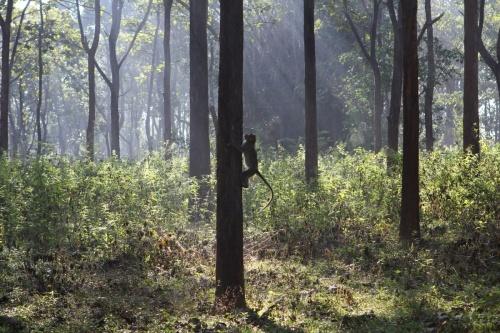 Страна, где много диких обезьян...