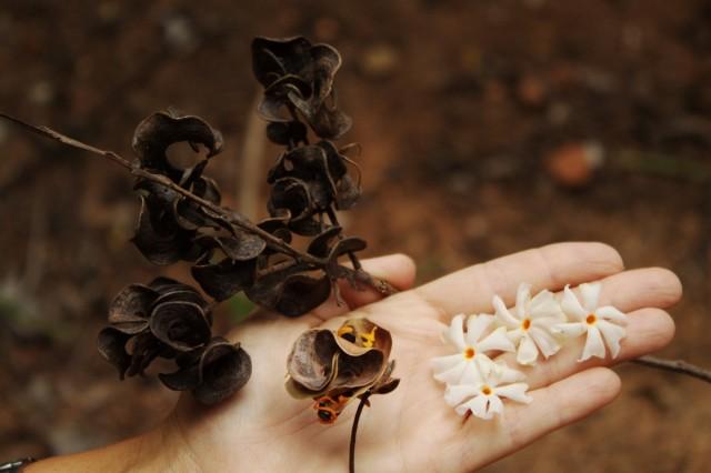 Разные семена ився земля в белых цветах.