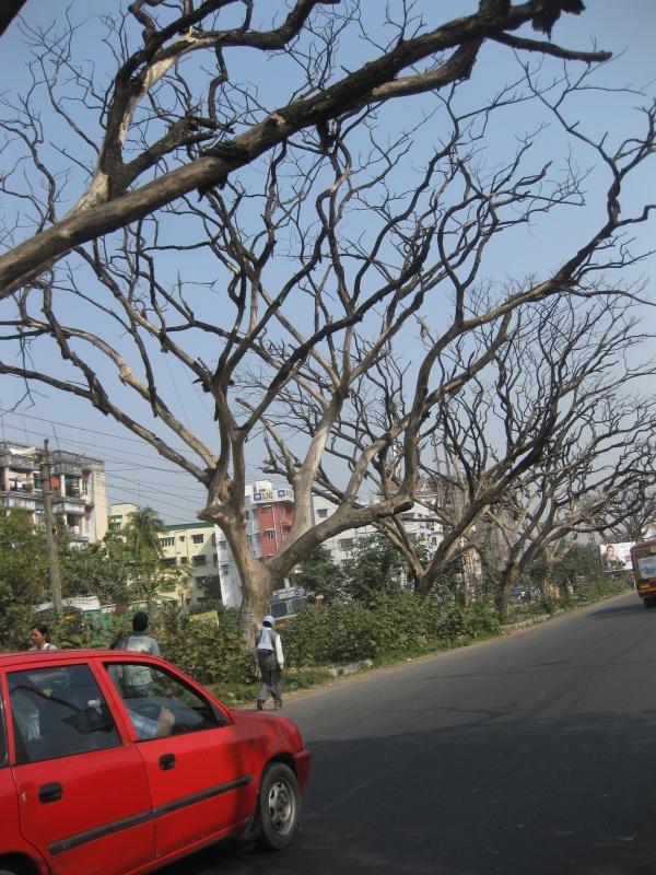 Мертвые деревья вдоль дороги