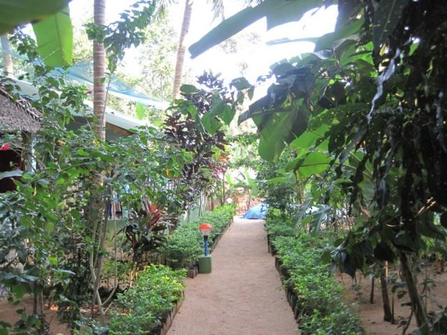 Аккуратные песчаные дорожки среди буйства тропической зелени напоминали тропу в Эдем