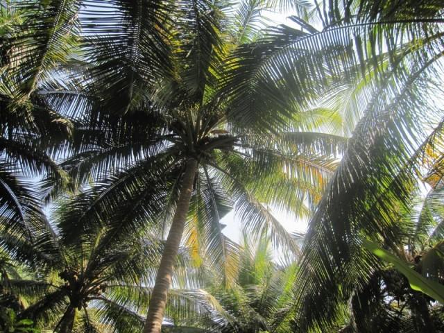 а над головой расчерчивала небо сетка пальмовых листьев