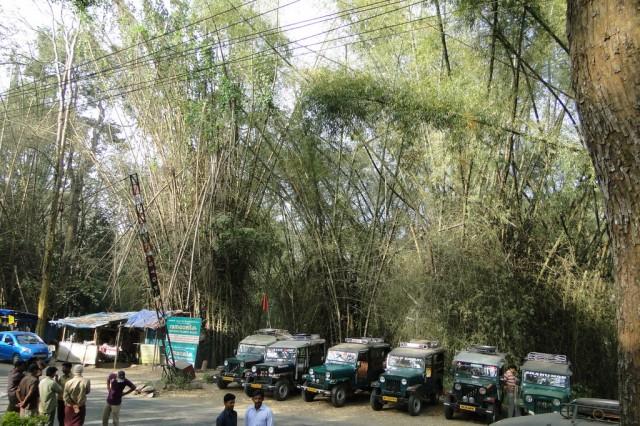 Возле входа в заповедник - можно оценить размеры тростника-бамбука... никогда их не различала :)