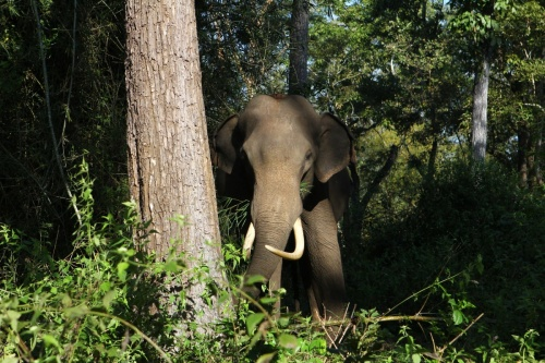 Слон во время ланча
