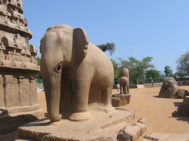 Слон у Пяти Ратх