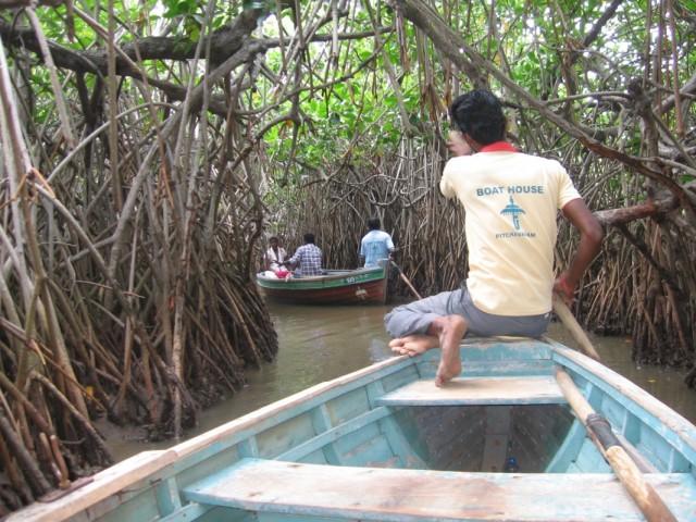 Каналы в мангровом лесу