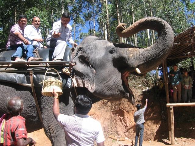 В след за индусами - кататься на слонах