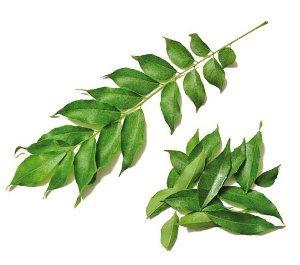 Листья карри