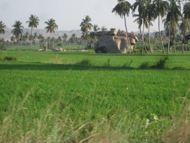 рисовые поля и дольмен какой то чтоли