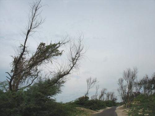 Дорога на край света