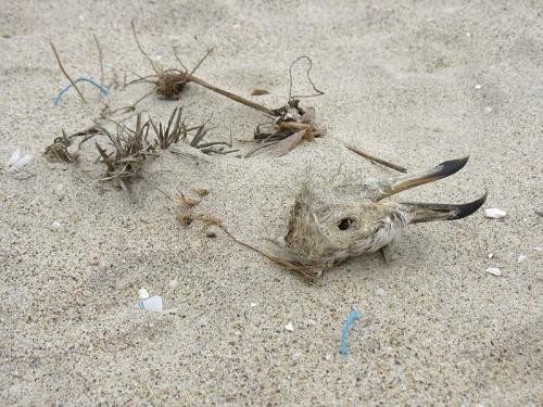 То, что осталось от птицы