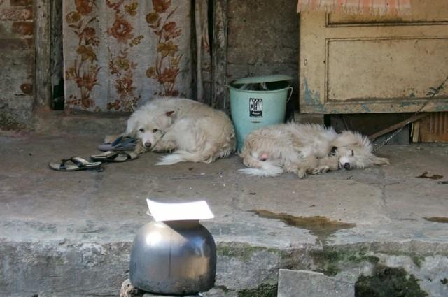 Спяааат учтааалые собачкиии...)