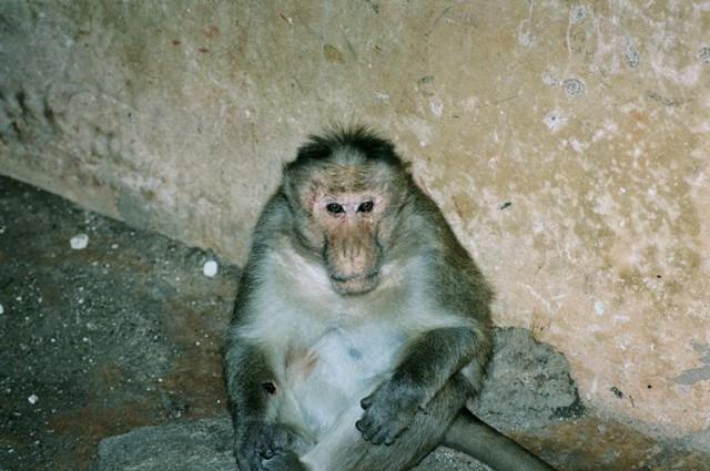 Грустный обезьян )...