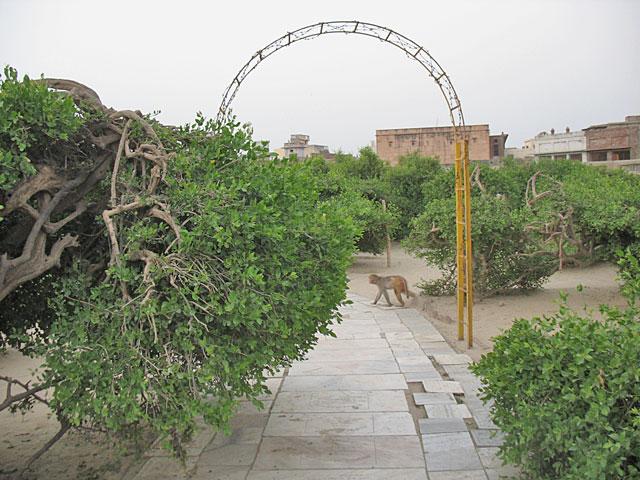 В саду Сева-кундж