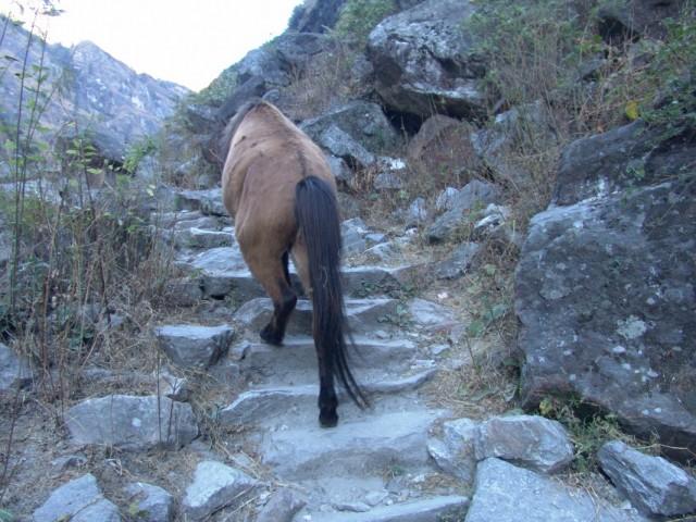 Лошади ходят в трек