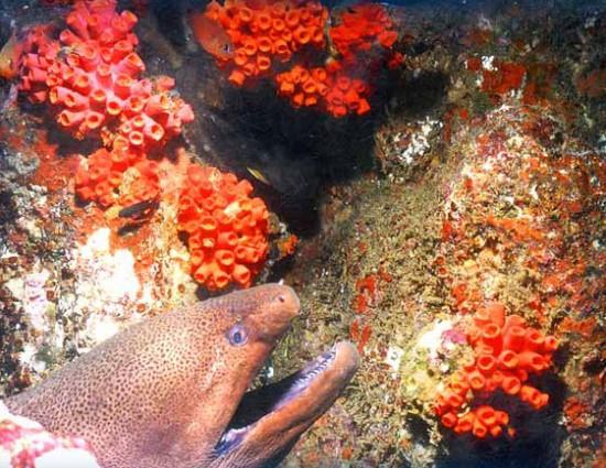 Кораллы у побережья Шри-Ланки