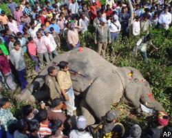 В Индии застрелен слон-убийца