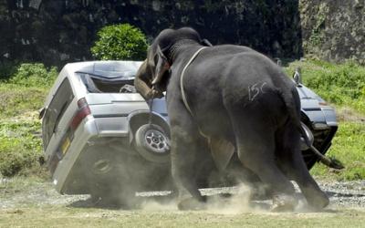 На Шри-Ланке слон напал на автобус