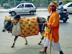 Корова на улице Дели