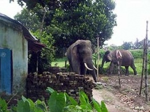 Слоны в индийской деревне.