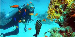 Коралловые рифы Египта - в числе номинантов на чудеса природы