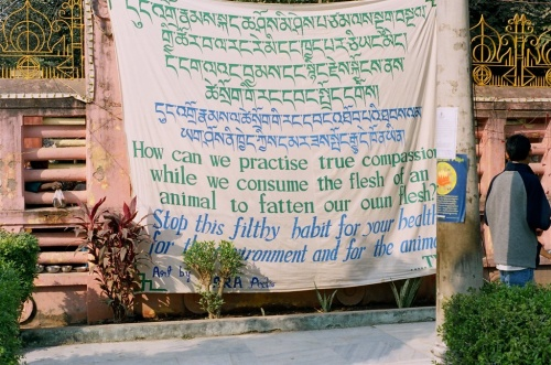 плакаты Tibetans for Vegetarian Society