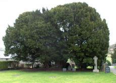Тис, Llangernyw, Уэльс, Великобритания