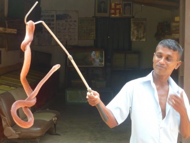 укротитель змей