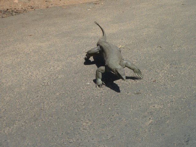 другие животные выбегают на дорогу...