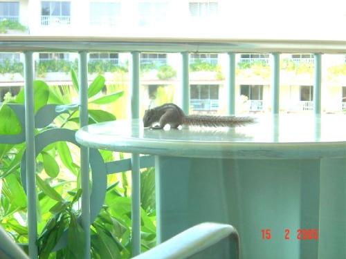 Eden Resort and SPA. Белочка на балконе